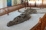 Cronosaur Fossil...male or female, Mr. J?